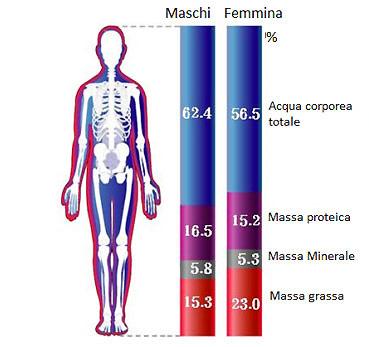 percentuale di grasso corporeo normale per 5 donne